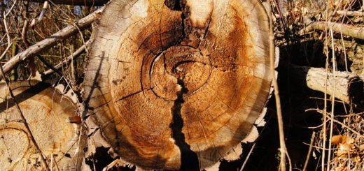 Photo du site freepik pour illustrer la filière Bois