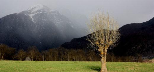 Arbres têtards Valbonnais © Angélique Pruvost