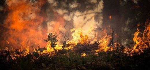 feu forêt © skeeze pixabay
